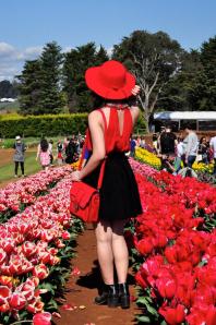 Goodbye tulips