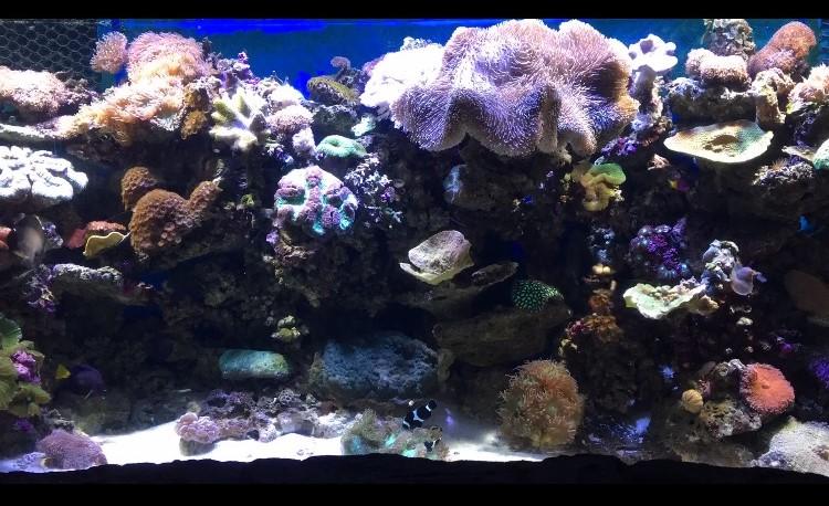 FullSizeRender (4)coral reef